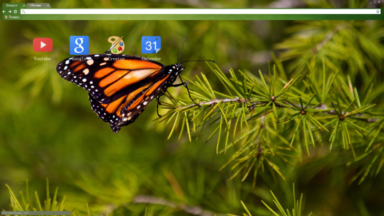 Butterfly Chrome Theme