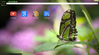Green Butterfly Chrome Theme