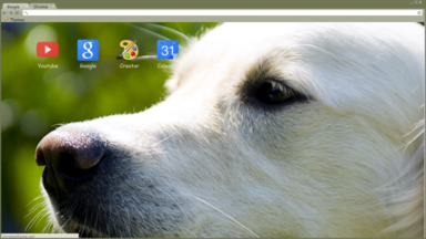Golden Retriever Chrome Theme
